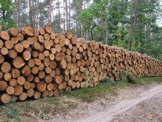 Ministerstwo Środowiska chce zmienić definicję drewna energetycznego, tak, by więcej drzew z polskich lasów nadawało się do palenia w piecach.