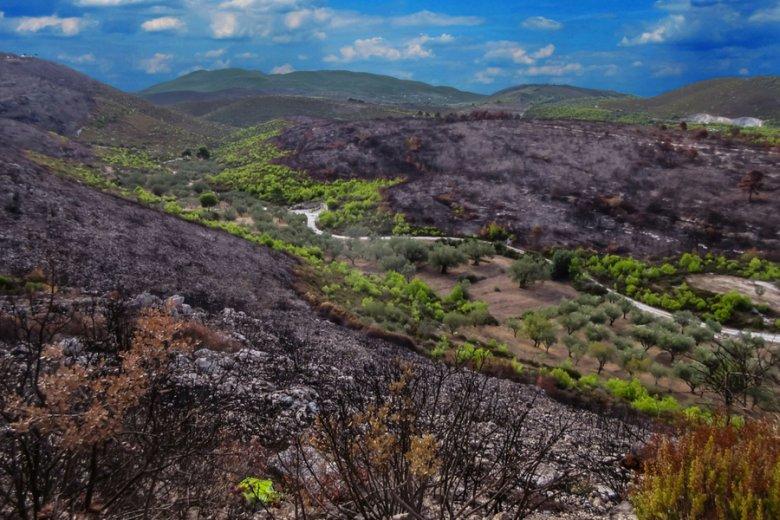 Spalone przez pożar wzgórza na wyspie Zakintos.