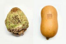 Najnowszy krzyk ekomody wśród warzyw - seler i dynia piżmowa ze świetlnym tatuażem.