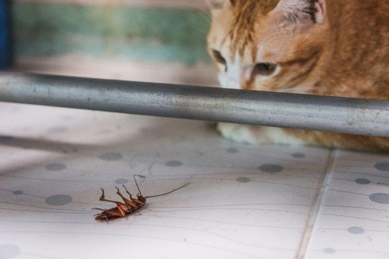 Polacy zostali nagrodzeni antynoblem za badania nad namagnesowaniem karaluchów.
