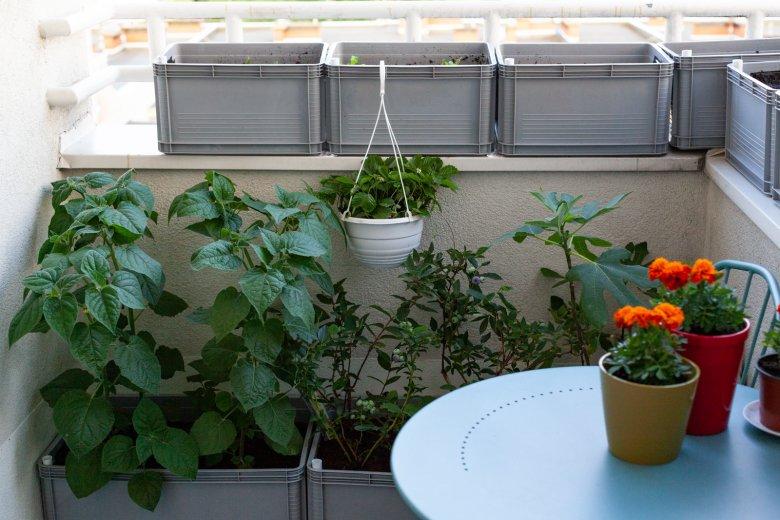 Nawet na małym balkonie można hodować warzywa i owoce, a nawet zwierzęta, np. dżdżownice.