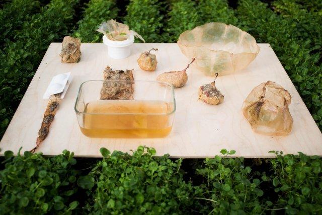 W SCOBY można bezpiecznie zapakować żywność. Opakowanie, tak jak zawartość, też jest jadalne.