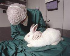 Testy na zwierzętach od dekad budzą dyskusje etyczne. Zdjęcie poglądowe.