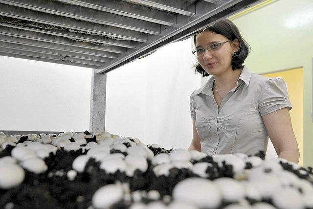 Naukowcy odkryli, że grzyby, w tym pieczarki, mają cenne składniki, opóźniające proces starzenia. Na zdjęciu dr Cecylia Ukłańska-Pusz z Centrum Grzybów Jadalnych i Leczniczych Wrocławskiego Uniwersytetu Przyrodniczego.