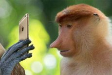 Nosacz sundajski - bohater wielu memów, został adoptowany przez Xiaomi Polska