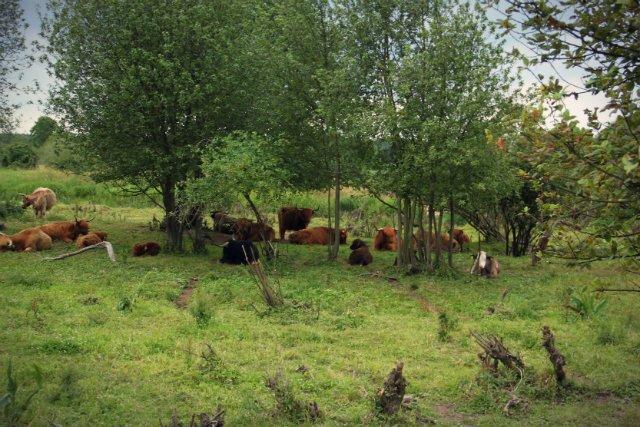 Przedsiębiorca zauważa, że choć hodowla dopiero się rozkręca (na 50 hektarach mężczyzna ma już około 70 sztuk), to ze zbytem nie ma najmniejszego problemu