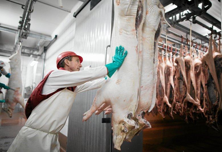 Hodowla i produkcja mięsa ma większy wpływ na klimat niż przemysł naftowy.