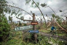 Lasy Państwowe zgodnie z obietnicami zabrały się za sprzedaż powalonych drzew. I przez ostatnie 12 miesięcy zarobiły na tym krocie