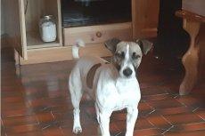 Pies imieniem Jack był posiadaczem biletu na samolot. Dzięki temu, kiedy jego lot został odwołany pies był uprawniony do otrzymania odszkodowania od linii lotniczej.