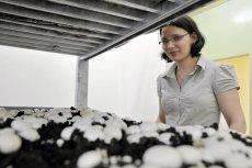 Champion, firma z Grudziądza, realizuje projekt zakładający wykorzystanie odpadów z pieczarkarni w celach energetycznych