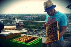 Pszczelarz Kamil Baj instaluje ule na dachu biurowca Eurocentrum