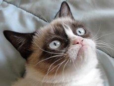 Grumpy Cat zmarłw wieku 7 lat.