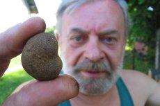 W Polsce znalezienie dziko rosnących trufli to wyjątkowe przypadki.