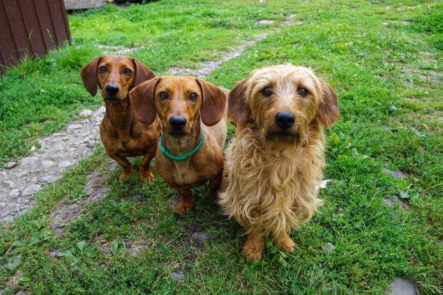 Twórcy 4Dogs wyszli z założenia, że ich klientami będą osoby chcące dostarczać swoim zwierzętom posiłki wysokiej jakości, ale nie mający czasu na ich codzienne przygotowywanie.