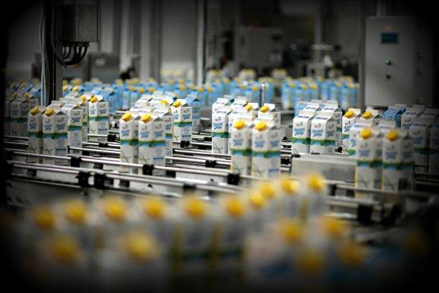 W pełni zmechanizowana hala produkcyjna w Bydgoszczy Spółdzielni Mlekpol, która w 2015 roku otrzymała tytuł Orłów Eksportu – swoje wyroby sprzedaje we wszystkich krajach świata