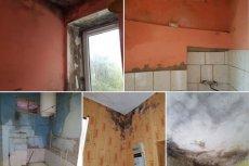 Takie mieszkanie zaproponowano samotnej matce z dzieckiem. Zanim kobieta by się wprowadziła, odbyłby się remont, jednak rodzina bała się grzyba na ścianach.
