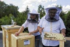 Decyzja ministra rolnictwa o zastosowaniu neonikotynidów może oznaczać zagładę pszczół