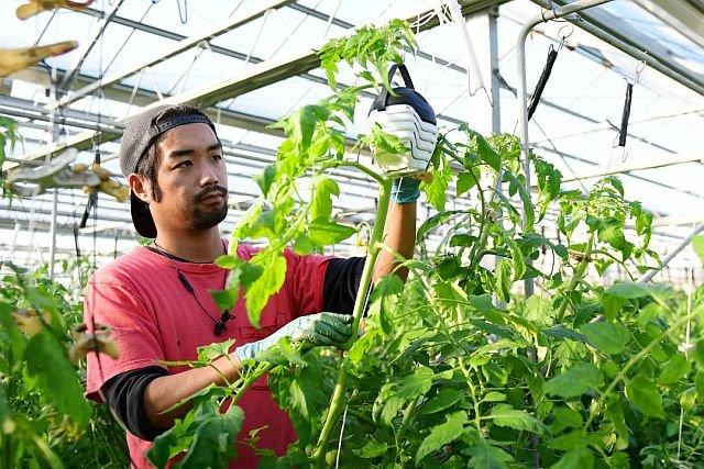 Czujniki używane podczas uprawy pomidorów