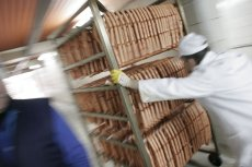 Tragiczne warunki pracy panują w zakładzie mięsnym w Toennies. Znajduje się tam 900 Polaków.