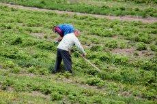 Rolnicy w Polsce są terroryzowani przez sadowników, którzy zatrzymują deszcz