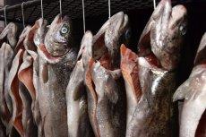 Ekolodzy apelują o zatrzymanie połowów dorsza