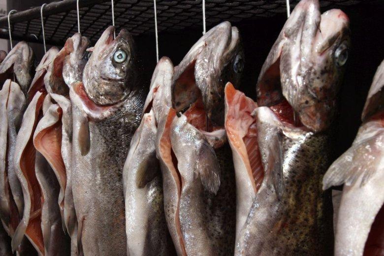 Ekolodzy apelują o zatrzymanie połowów dorsza, inaczej w przyszłych latach nie zjemy go w nadmorskiej smażalni