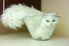 Marc-Antoine Fardin z Lyonu zbadał, czy kot może być jednocześnie płynem i ciałem stałym