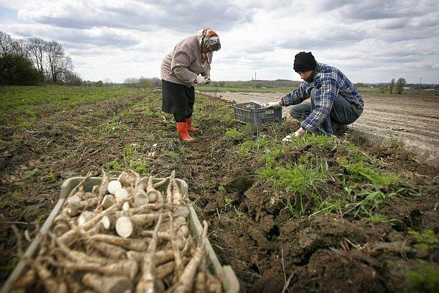 Producenci żywności za rzadko skarżą się na duże sieci, rząd chce to zmienić