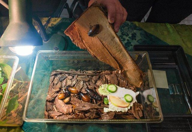 Robaki i owady to remedium na rosnący brak żywności