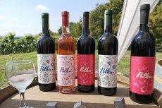 Wina ze Srebrnej Góry smakiem nie ustępują włoskim czy francuskim, są dostępne w Lidlu.
