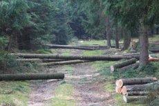 Lasy Państwowe wydadzą 80 mln na budowę dróg